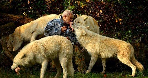 se-acerca-a-lobos-salvajes-5